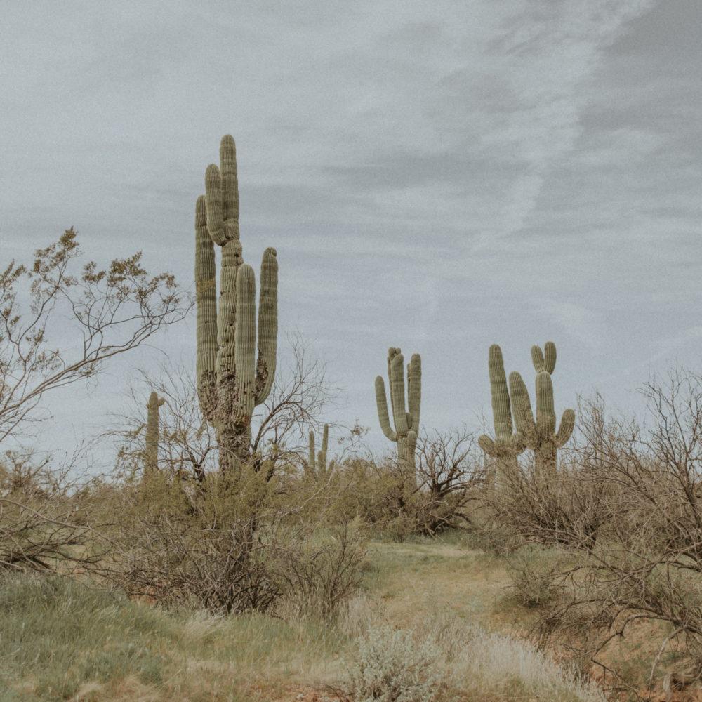 cactus western art print