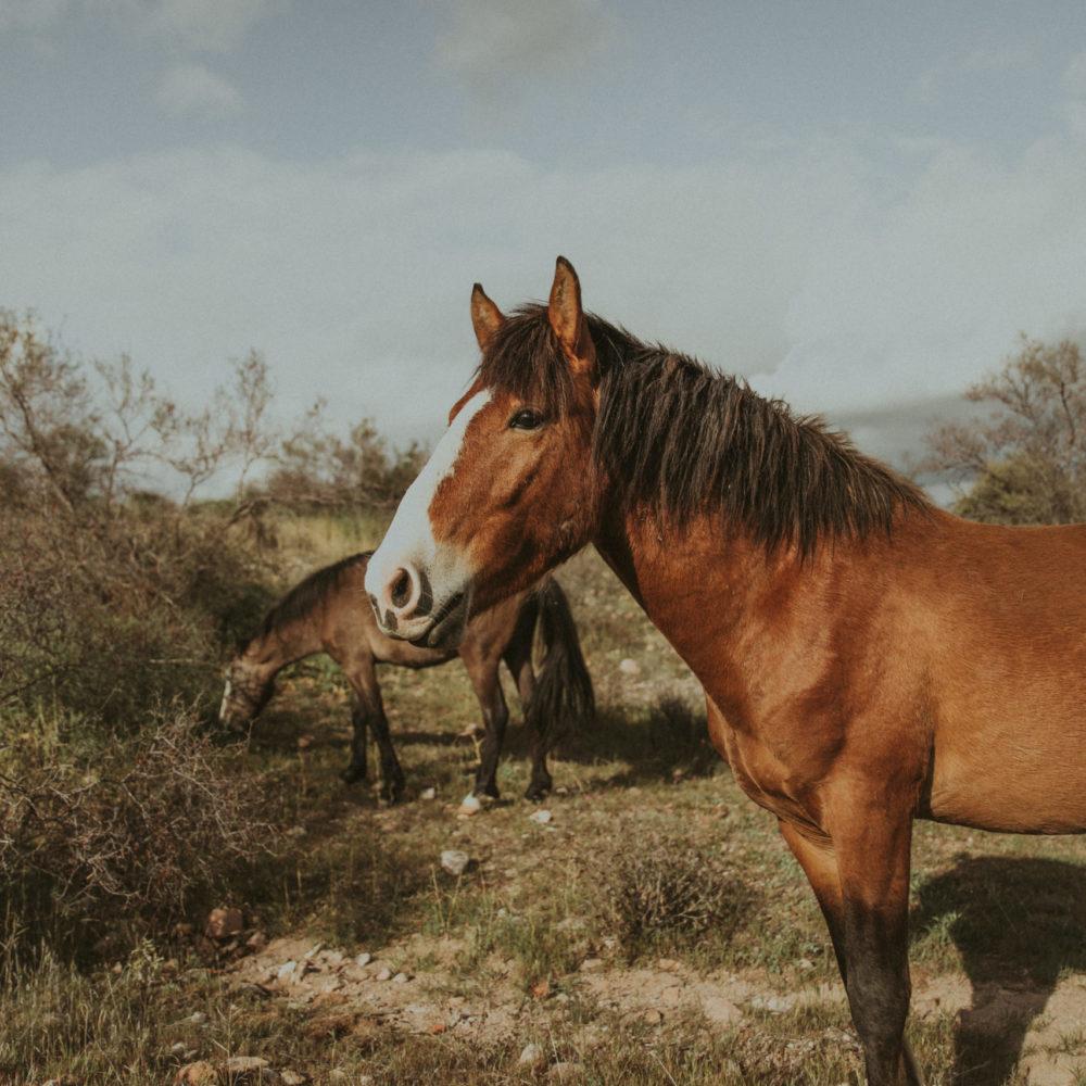 Horse Paper Prints