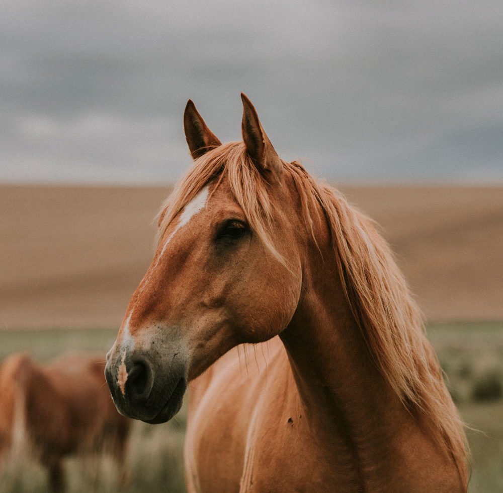 western art horse print
