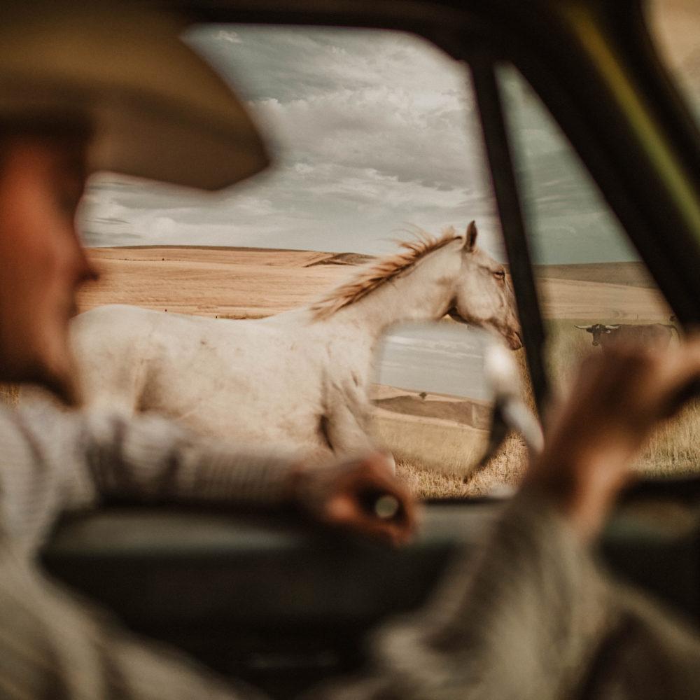 Ranch Life Paper Prints