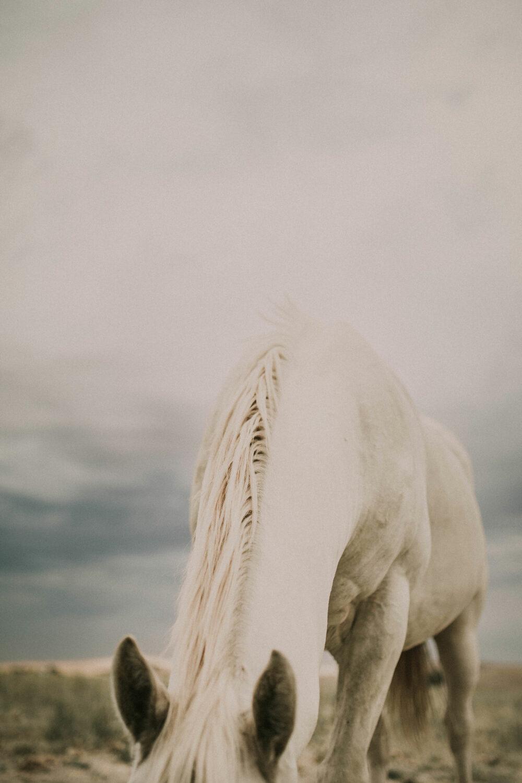 horse western art print