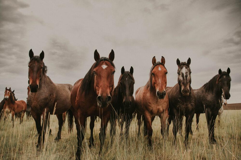 bucking horse western art print