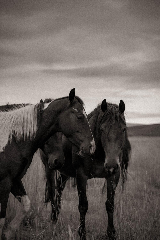 black and white western art print