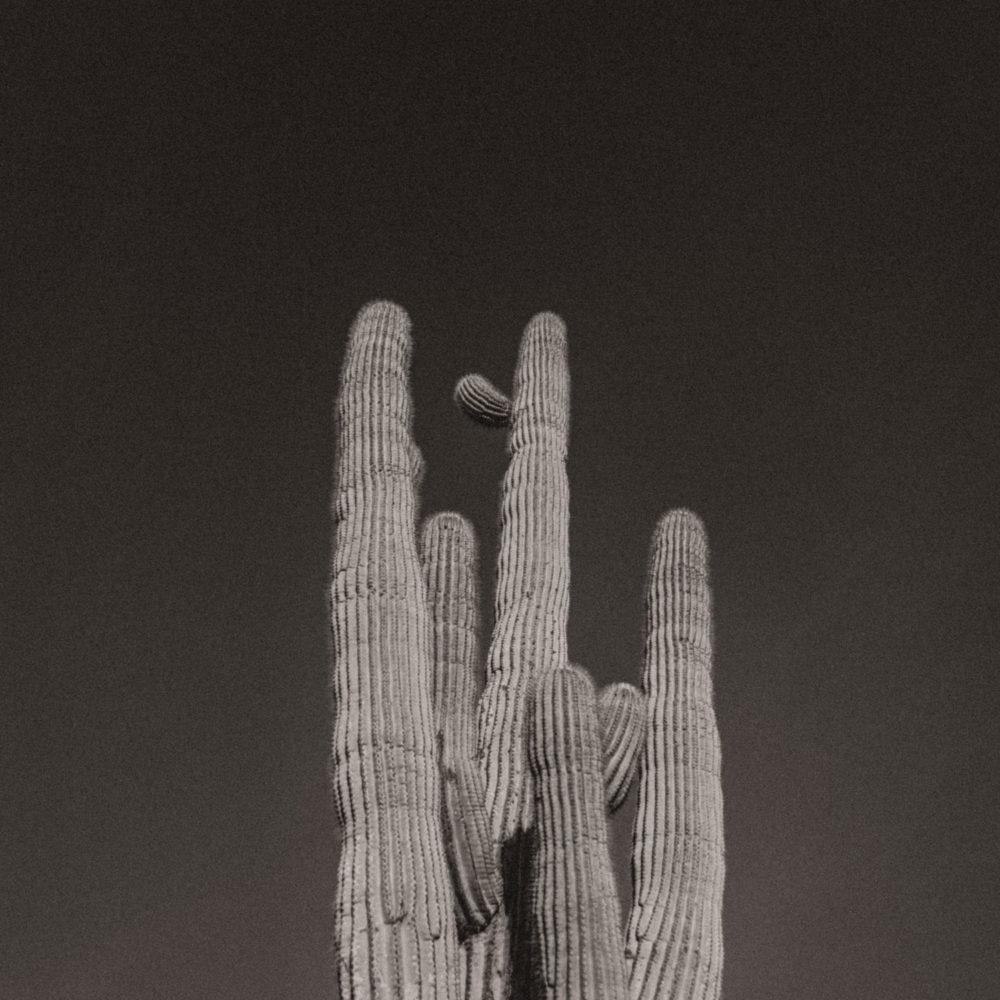 western art print cactus