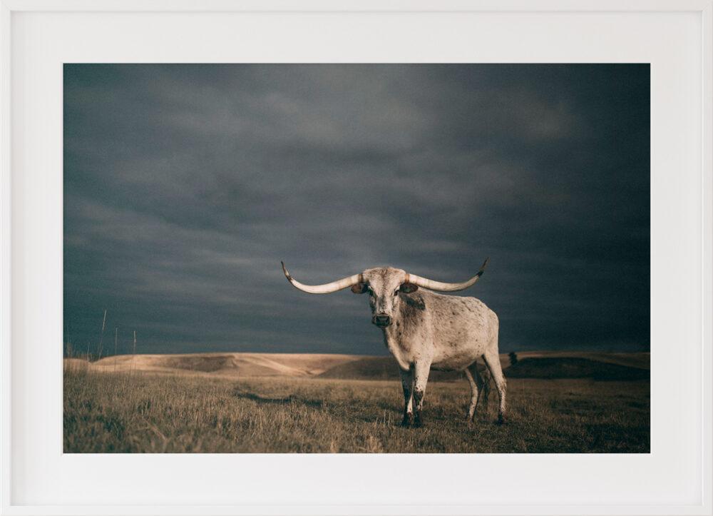 longhorn cow print
