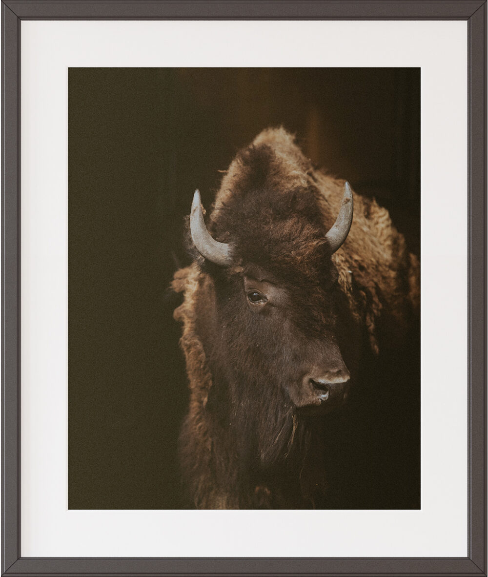 buffalo decor