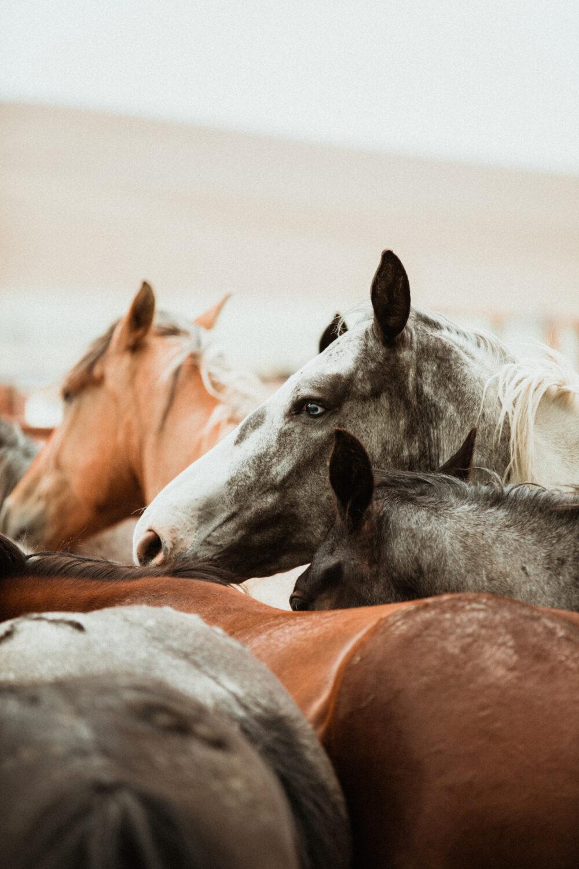 horse paper print